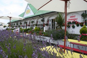 Alfresco Dining in the Flower Garden at Sara's Tearooms, Great Yarmouth seafront's Dog friendly Cafe